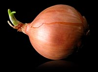 Onions rule!